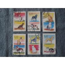 6 Timbres Postales De Arabia Coleccion Perros Y Gatos.