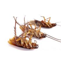 Mata Cucarachas , Las Elimina