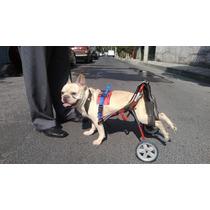 Car Can Silla De Ruedas Para Perros Discapacitados Tam.chico