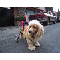 Car Can Silla De Ruedas Para Perro Discapacitado Pequeño