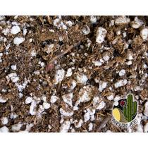 Tierra Sustrato Cactus Suculentas Semillas (mercadopago)