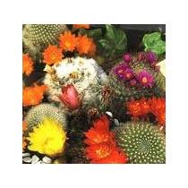 Cactus Mixl 10 Semillas Jardín Maceta Flores Mpsdqro