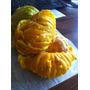 Alimento Para Ganado,cascara De Naranja