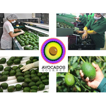 Aguacate Hass / Avocados Nacional & Exportacion