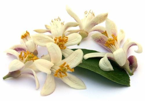 flor planta seca: