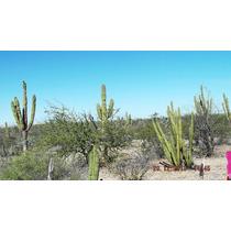 Terreno Rustico En La Paz Baja California Sur 91 Hectareas