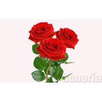 Se Vende Semilla De Rosal De Barios Colores Aprobechalas