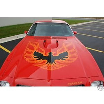 Calca Cofre Firebird 3 Colores