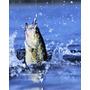 Combo 50 Accesorios Para Pescar En Agua Dulce