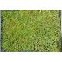 Saco 22.5 Kg. Semillas Para Pasto Lolium Perene ( Rye Grass)