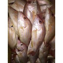 Venta De Pescados Y Mariscos En Lonja, Filete O Fresco