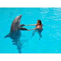 Encuentro Con Delfines Cancún