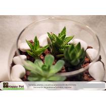 Arreglos De Plantas Y Cactus