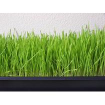 Kit Cultivo Forraje Verde Hidroponico Fhv Alimento Animales