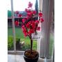 Árbol Artificial Con Rosas