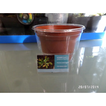 Kit De Siembra Dionaea Muscipula (plantas Carnivoras)+regalo