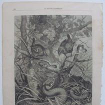 Litografia (23x31 Cms): La Curruaca Y La Serpiente Cascabel