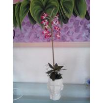 Orquidea Decorativa