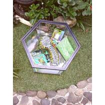 Tortuguero Hexagonal Paquete Isla Alimento Calcio Grava.ofer