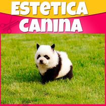 Como Poner Estetica Canina Y Estilista De Perros Profesional