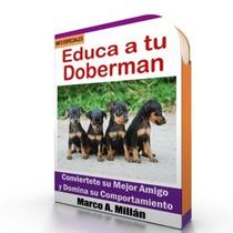 Como Educar A Un Doberman - Guía De Adiestramiento Raza