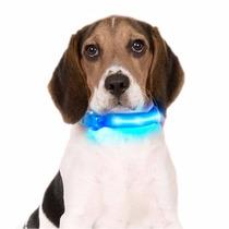 Collar Perros Led Ultraluminoso