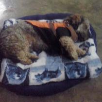 Cama Para Perro Y Gato Entregas Personales En Tranvia