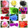 120 Semillas Rosas Exoticas 12 Colores Mercadoenvios