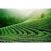 1 Kg Te Verde Chino Importado Calidad Garantia Autenticidad