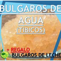 Bulgaros De Agua Tibicos+ Kefir (leche) Regalo ,envió Rapido