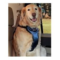 Pechera De Seguridad Auto Solvit Extra Grande Paseo Perro