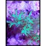 Coral Sinularia Flexibilis Verde Radiactivo Frag
