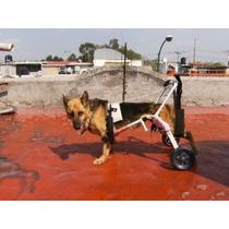 Silla De Ruedas Para Perros Gatos Arnes