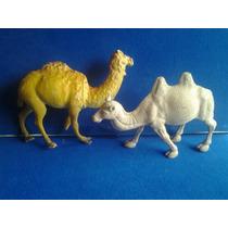 Lote De Camellos O Dromedarios