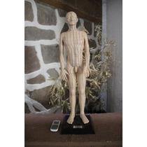 Modelo Anatómico Humano Sistema Nervioso Acupuntura