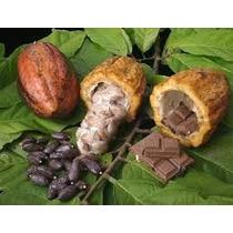 1 Arbol De Chocolate, Cacao Criollo Vivero Wow