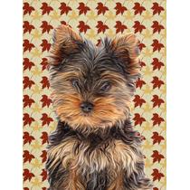 Hojas De La Caída Del Perrito De Yorkie / Yorkshire Terrier