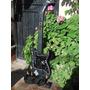 Guitarra Inalambrica Guitar Hero Krammer Striker Ps2