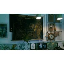 Lamina Cuerpo Humano / Lengua / Antigua Vintage Decoración