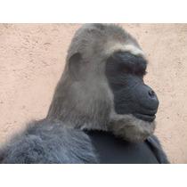 Gorila Disecado