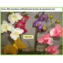 Flores Orquideas Mmu