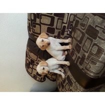 Cachorros Labrador Legítimos