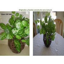 Plantas Decorativas Daa