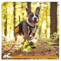 Kurgo Paso N Strobe Dog Boots Pequeño