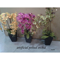 Orquideas Exclusivas