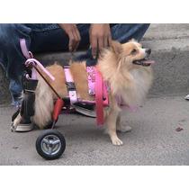 Silla De Ruedas Para Perro Discapacitado Displasia De Cadera