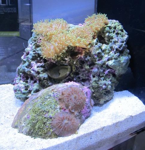 Dymax aragonita para acuario marino 560 xkgg9 precio d for Acuario marino precio