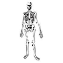 Recursos Para El Aprendizaje Esqueleto Rompecabezas Del Piso