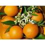 Arbol De Naranja, Naranjero