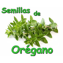 Semillas De Oregano Hidroponia Especia Condimento Huerta